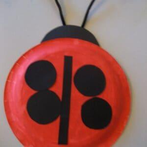 Ladybugs are everywhere!