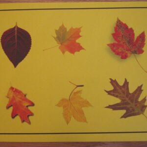 Autumn Puzzle & Leaf Hunt
