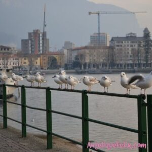 Stylish Kindness for the Birds {via AngeliqueFelix}